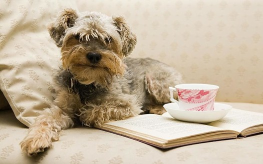 lets with pets dog drink tea